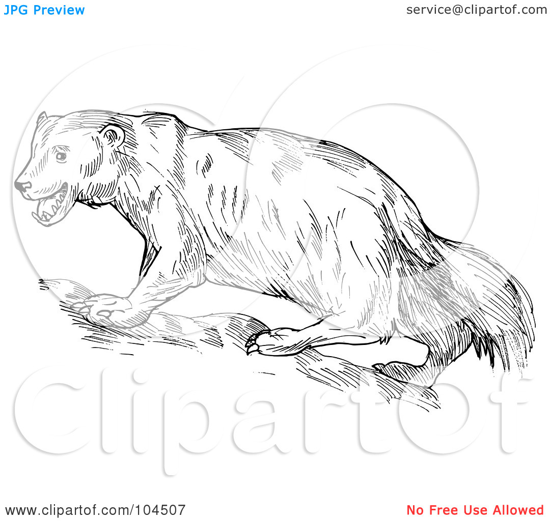 Royalty Free RF Clipart Illustration Of A Sketched Wolverine 1024104507